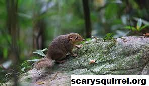 Tupai Kekes Binatang Endemik Wilayah Tropik