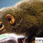 Jenis Tupai: Identifikasi, Makanannya, dan Fakta Menarik Lainnya